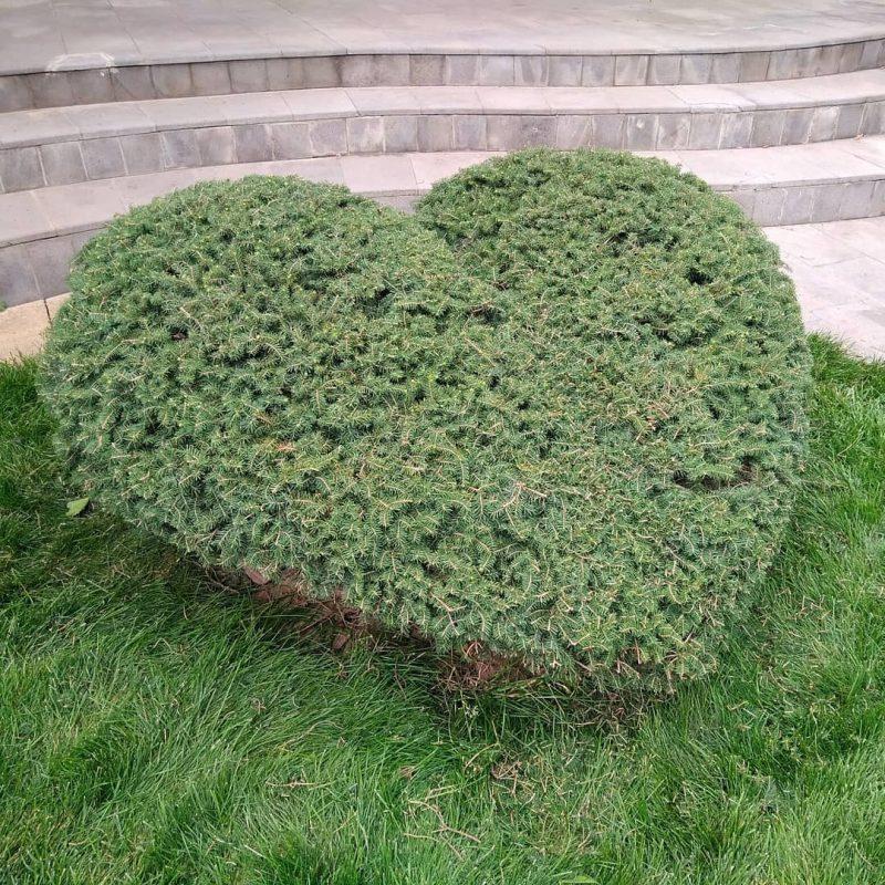 уход за садом в Белореченске и Краснодаре