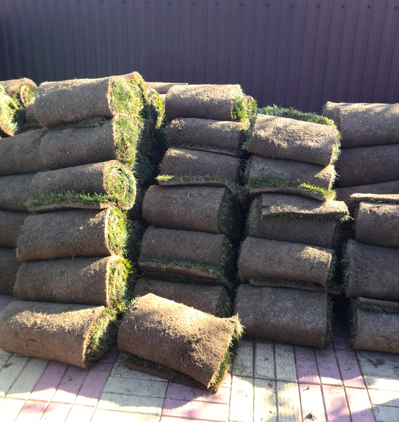 Устройство сеянного и рулонного газона