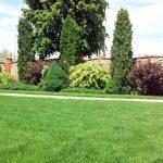 Устройство сеянных и рулонных газонов