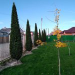 Устройство газонов, сеяный, рулонный
