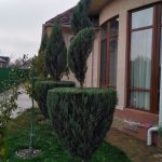 Обрезка декоративных растений