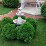 Декоративная обрезка хвойных деревьев