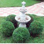 Декоративная обрезка хвойных растений. Туя западная