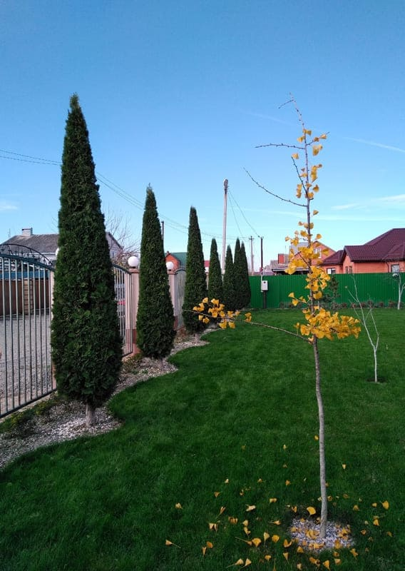 газон кедров град краснодар белореченск
