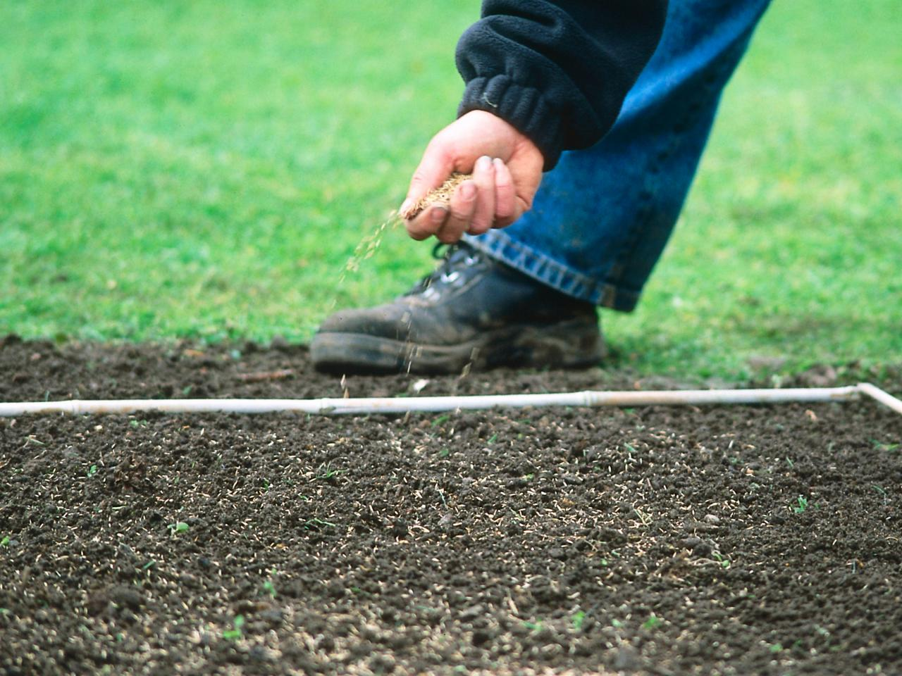 устройство сеянного газона
